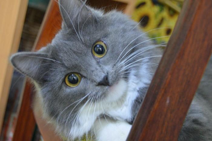 Все любят котиков Кот, Домашние животные