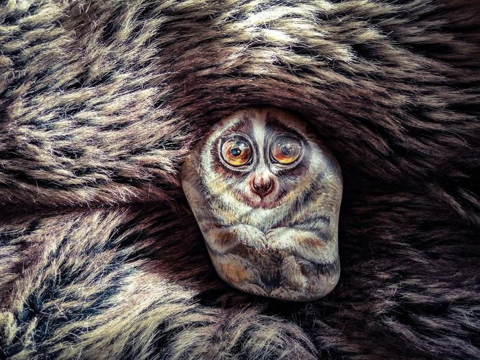 Лемур Добби. Горный Алтай, Роспись по камню, Лемур лори, Милота, Акрил, Животные