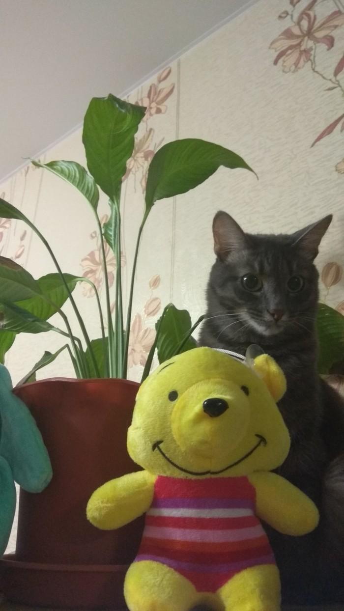 Мой кот, просто так. Он немного странный. Но забавный) Кот, Домашние животные, Мяу, Видео, Длиннопост