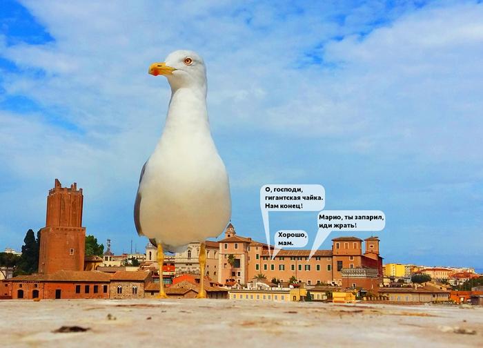 Римская чайка UPD: Чайка, Рим, Гигант