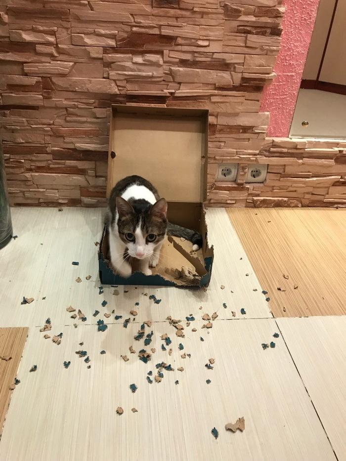 Коты в коробках не сидят