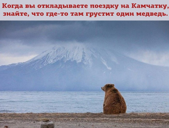 Не едь в Турцию-навести мишку Камчатка, Медведь, Одиночество, Фотография
