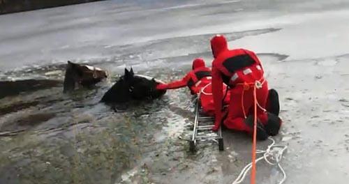 Спасение попавших под лёд лошадей! Лошади, Озеро, Лед, Спасение, Видео, Репортаж, Длиннопост