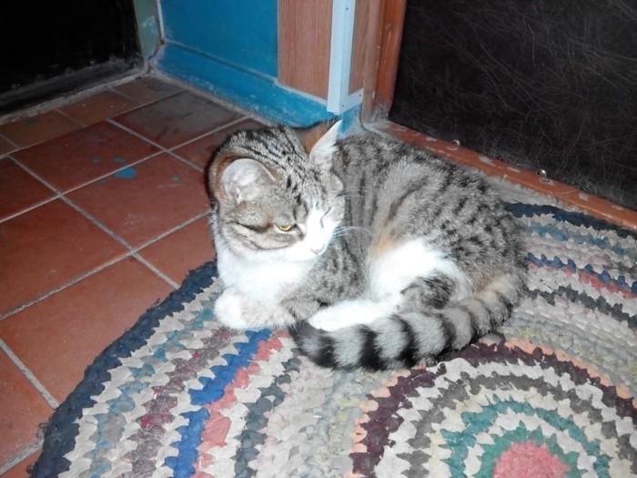 Котик потерялся - ищет своих хозяев, либо новых. Кот, Без рейтинга, Потерялся кот, Могилев, Видео, В добрые руки, Домашние животные