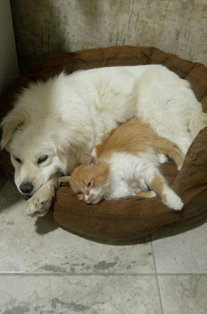 Когда новое мягкое место ну о-о-очень мягкое Кот, Собака, Домашние животные, Собачьи будни, Коты и собаки вместе, Дружба