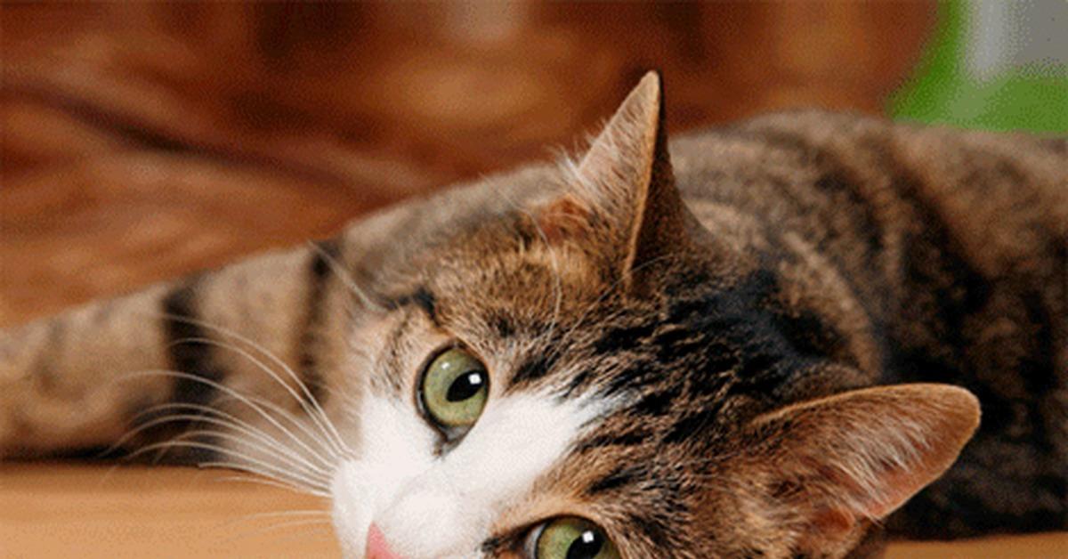 Движущиеся картинки приколы с котами