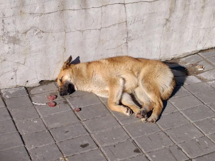 Встретил на улице Кот, Собака, Домашние животные