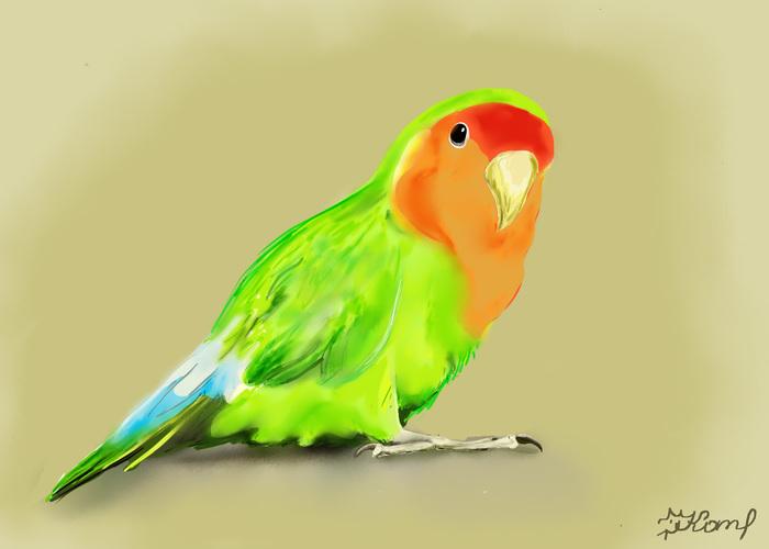 Неразлучник Рисунок, Попугай, Графический планшет, Неразлучники, Попугай неразлучники