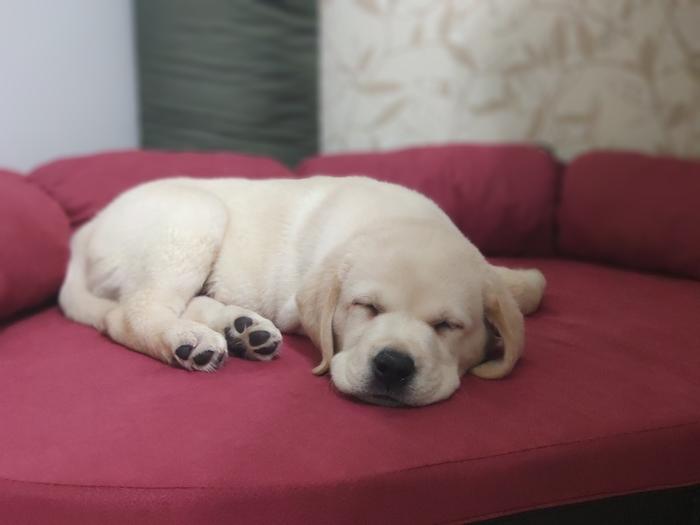 Спящая милота