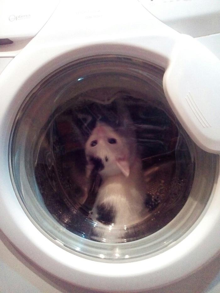 Хочу в космос Кот, Длиннопост, Стиральная машина, Домашние животные
