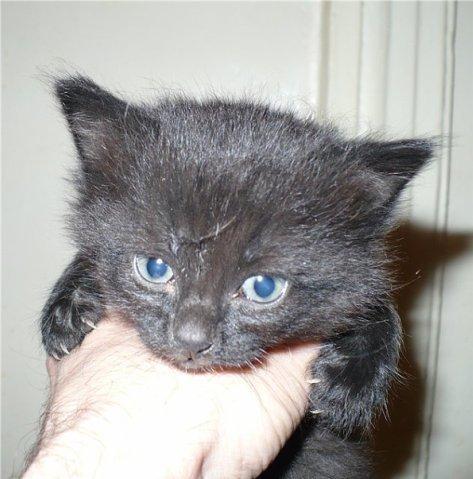 Обычная девушка и первый кот Блог, Стадо, Длиннопост, Кот, Домашние животные