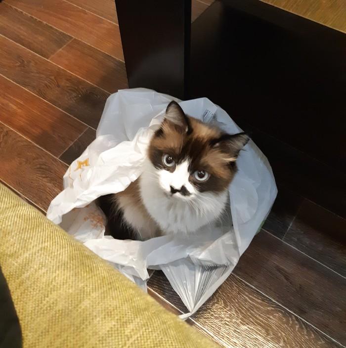Кошкина ревность Кошка по имени Кошка, Кризис, Длиннопост, Кот