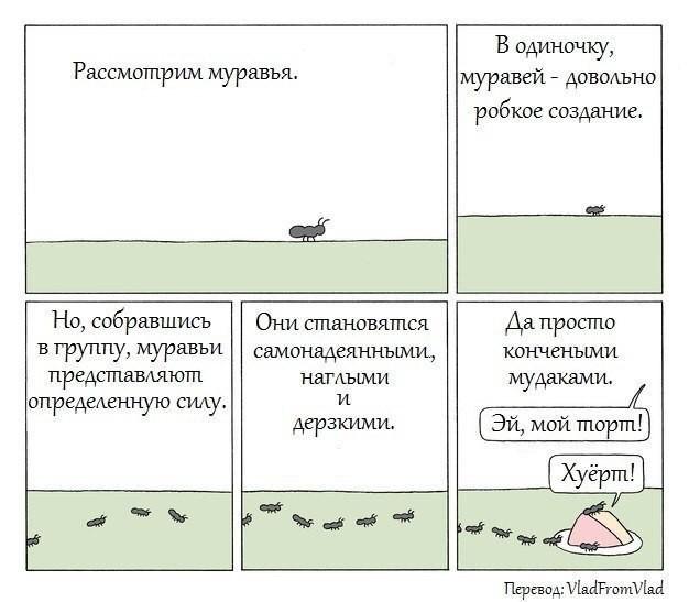 Домашние Муравьи Муравьи, Питомец, Длиннопост