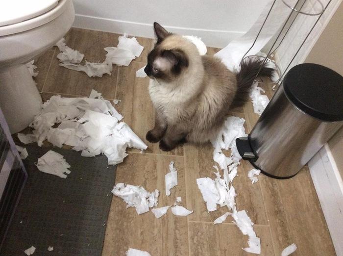 Ой, а кто это сделал? Кот, Хулиганство, Туалетная бумага, Порвал, Оно само, Длиннопост