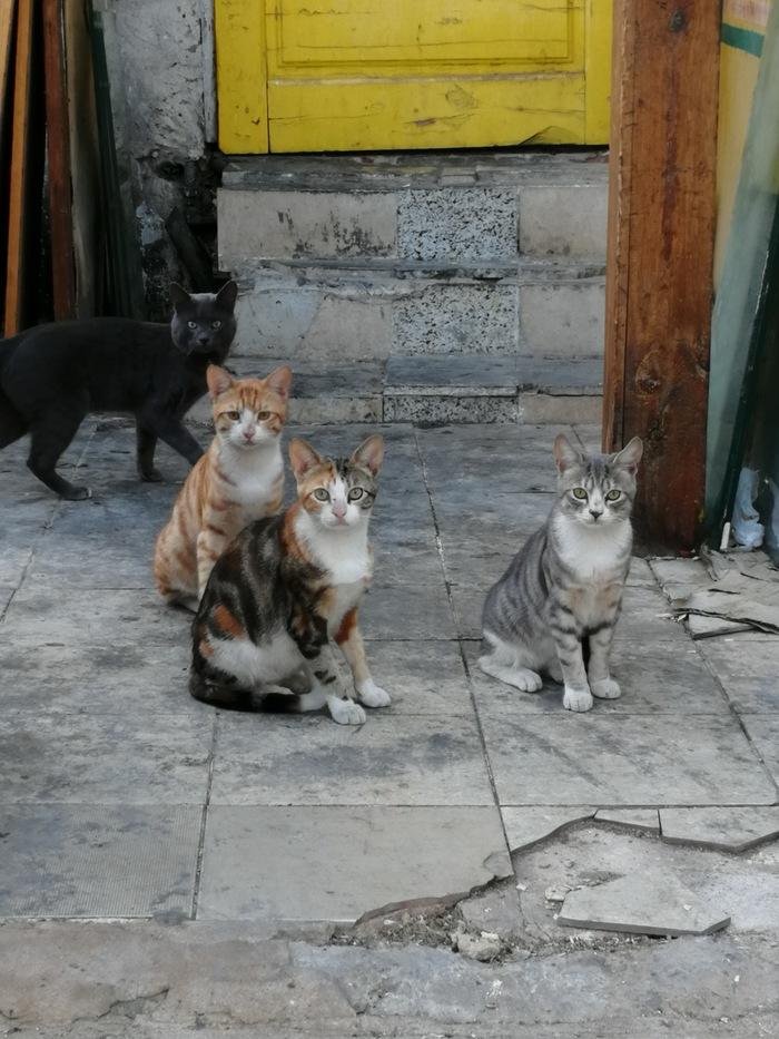 Египетские коты Кот, Египет, Длиннопост