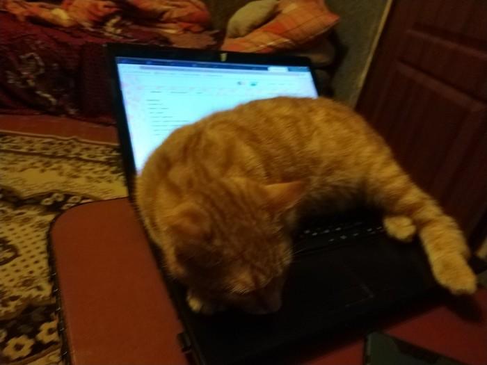 Кажется теперь это его ноутбук Кот, Ноутбук, Наглость, Длиннопост