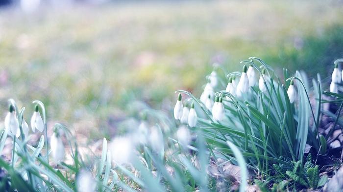 Весна Стихи, Поэзия, Весна, Предвкушение, Природа