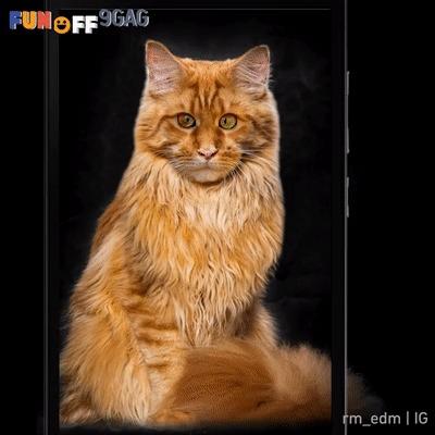 ШОК! раскрыта вся правда о котиках в инстаграме!