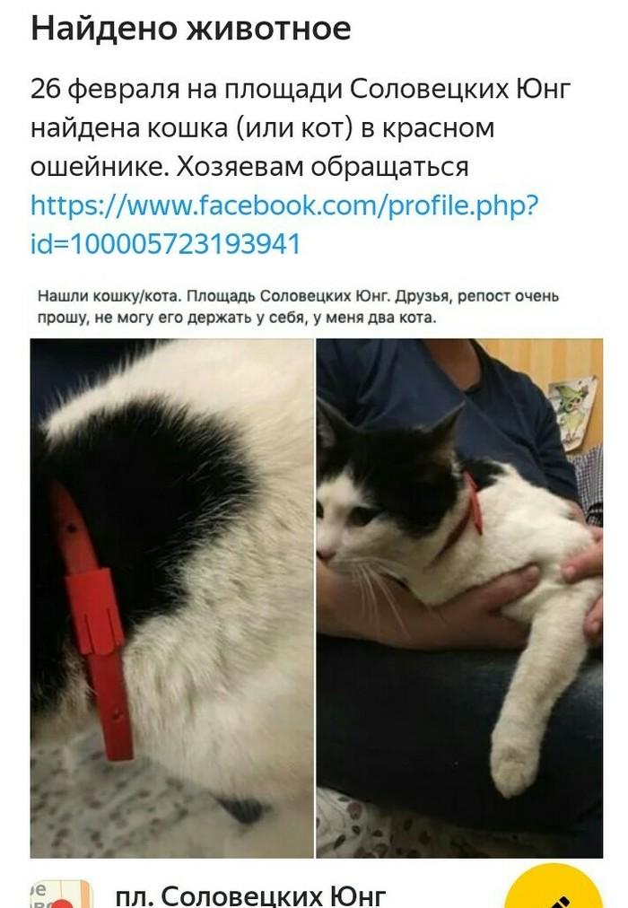 Найден кот .репост.