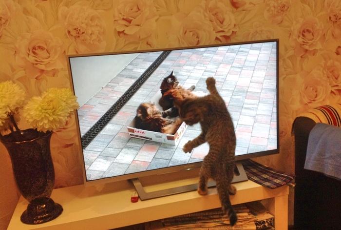 Кошечка Матильда смотрит кино про котиков Длиннопост, Кот, Телевизор, Домашние животные