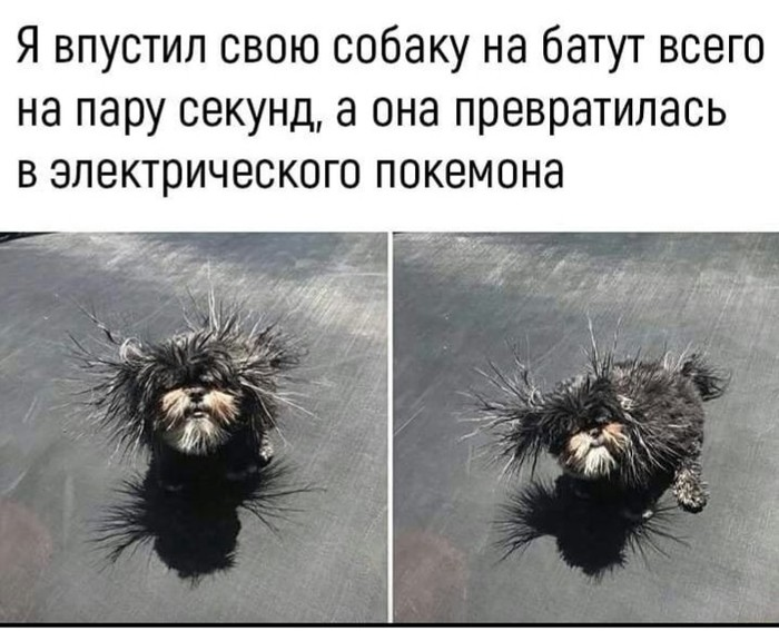 Собака и батут ))