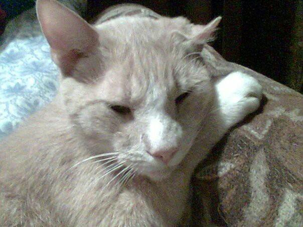 Мои животные Кот, Собака, Животные, Братья наши меньшие, Длиннопост