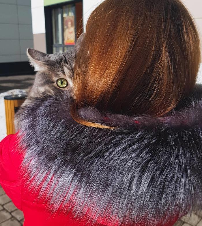 Решили коту показать весну Длиннопост, Кот, Весна, Впечатления