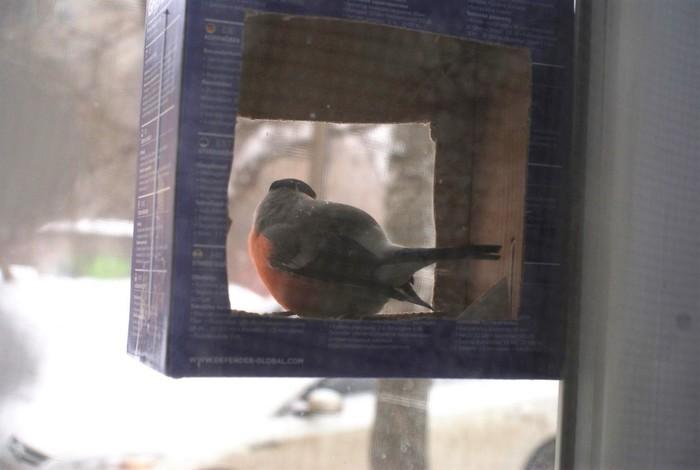 Долгожданный пернатый гость Кормушка, Снегири, Птицы