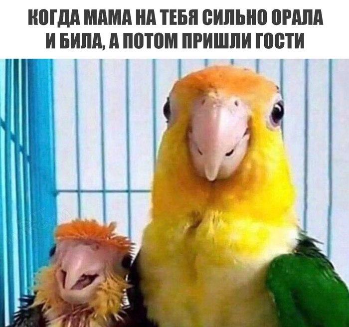 Попуги