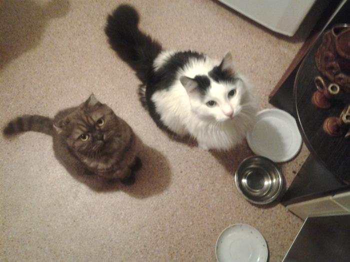 Мои кошки. Кот, Котята, Кошкин дом, Кошатники, Длиннопост, Котомафия