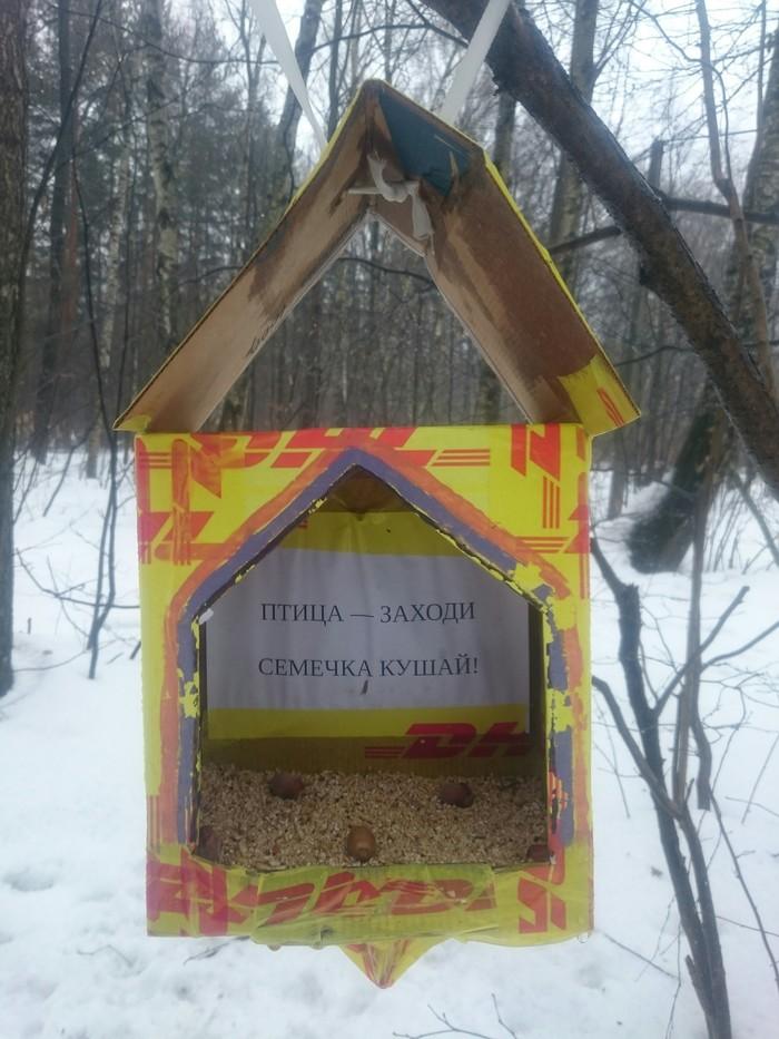 Наш весенний гостеприимный чудный лес! Лес, Прогулка, Русская весна, Длиннопост