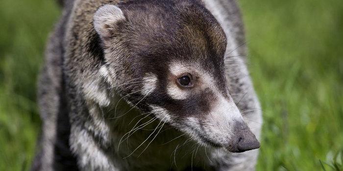 Животные, которых вы совершенно точно не видели. Животные, Удивительное, Scientaevulgaris, Зоология, Природа, Длиннопост