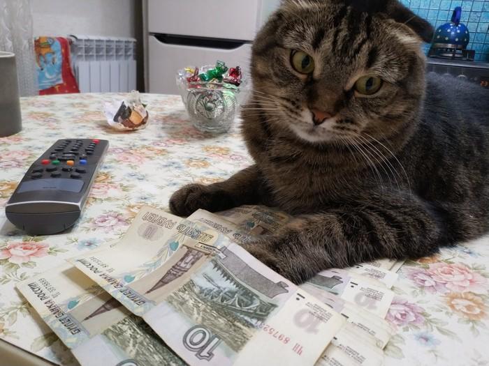 Деньги, я люблю деньги Кот, Деньги, Длиннопост, Ёлка
