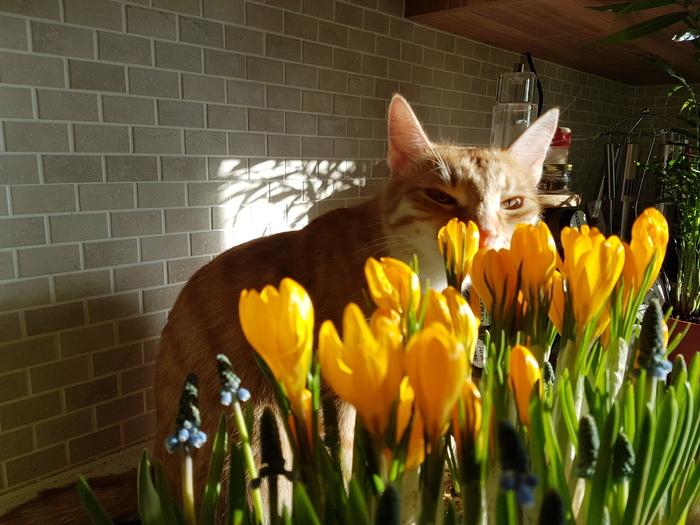 Котиков вам и весны! С наступающим праздником, дамы! Цветы, Солнце, Весна, 8 марта, Длиннопост, Кот, Домашние животные