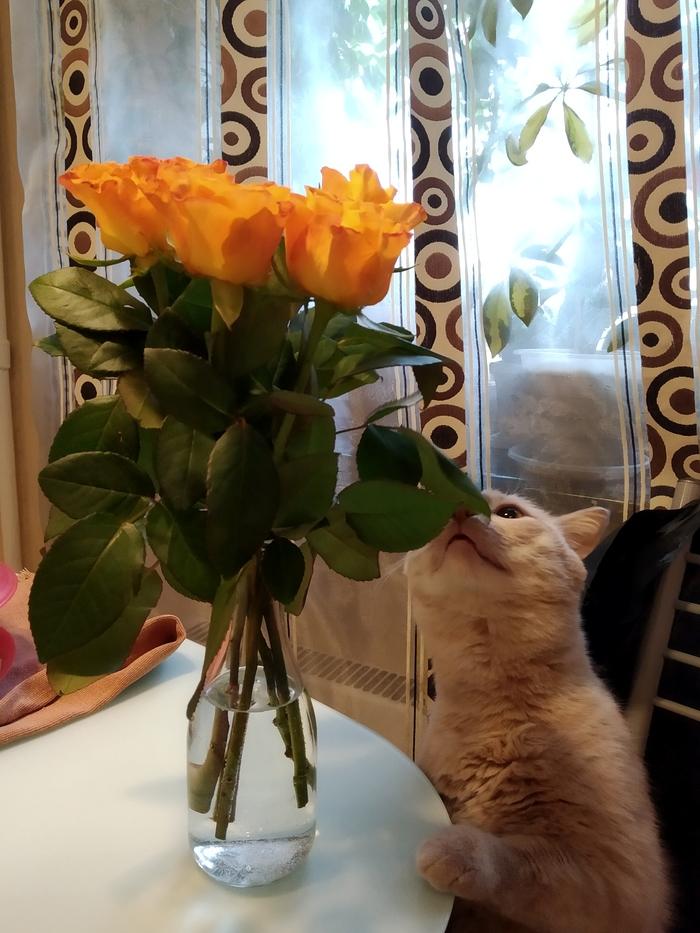 Котики поздравляют с международным женским праздником! Кот, Цветы, 8 марта