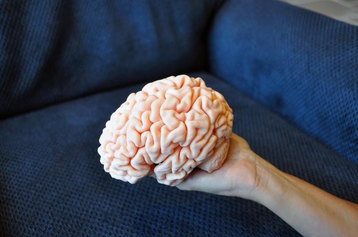 Мозг Мозг, 3D модель, МРТ, Reddit