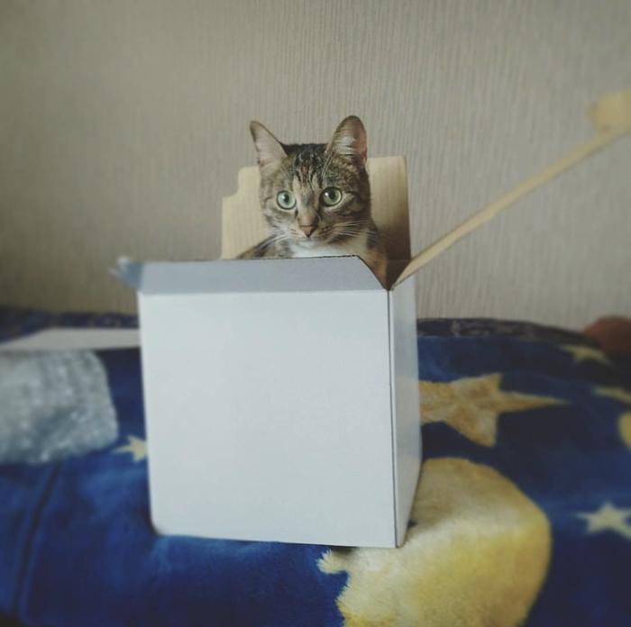 Котик в коробочке Кот, Коробка, Домашние животные