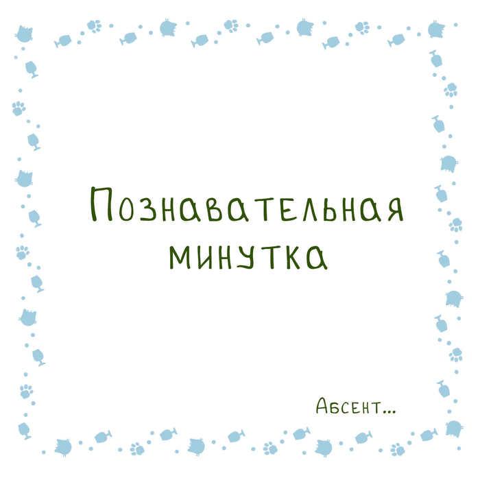 Горячительная минутка Кот, Алкоголь, Комиксы, 18+, Туйон, Бухич, Длиннопост