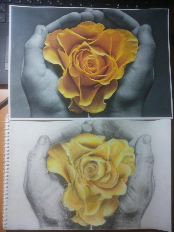 Роза в руке. Да, да, знаю, что ошибок видимо не видимо, аж глаза колит. Ну не мастер я, что уж! Учусь еще, вот! И дальше буду!)) Роза, Руки, Цветные карандаши, Простой карандаш, Длиннопост, Рисунок, Рисунок карандашом, Цветы