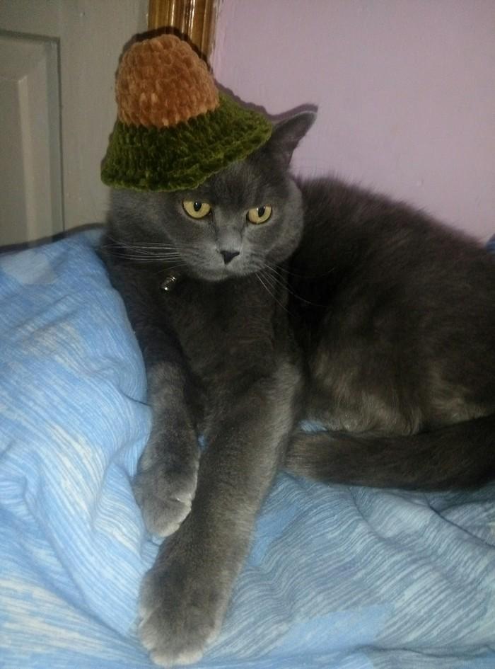 Когда хозяйка начала вязать авокадо, но что-то пошло не так Кот, Вязание, Шляпа, Домашние животные
