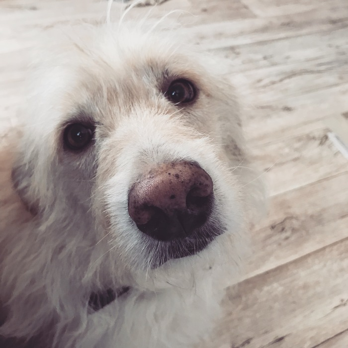 Собака Собака, Собачий нос, Собачники, Питомец
