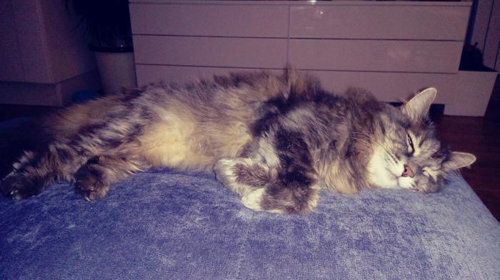 Кошка самец Тихон Кот, Спасибо что живой, Тихон, Работа, Длиннопост, Домашние животные
