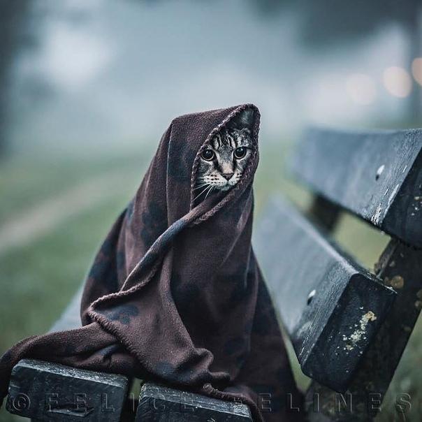 Весна говорите? Кот, Одеяло, Холод, Фотография, Длиннопост, Домашние животные