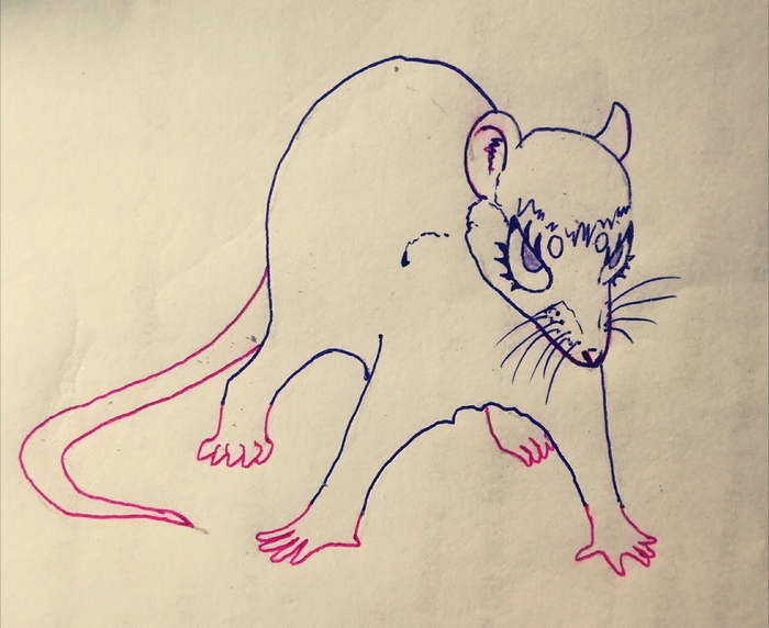 Крыса против мира (рассказ) Крыса, Грызуны, Рассказ, Сказка, Истории, Животные, Варан, Длиннопост