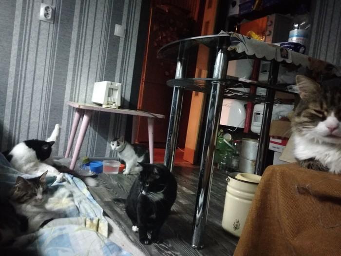 Мой личный котоленд.Или найди кота. Кухня, Кот, Домашние животные