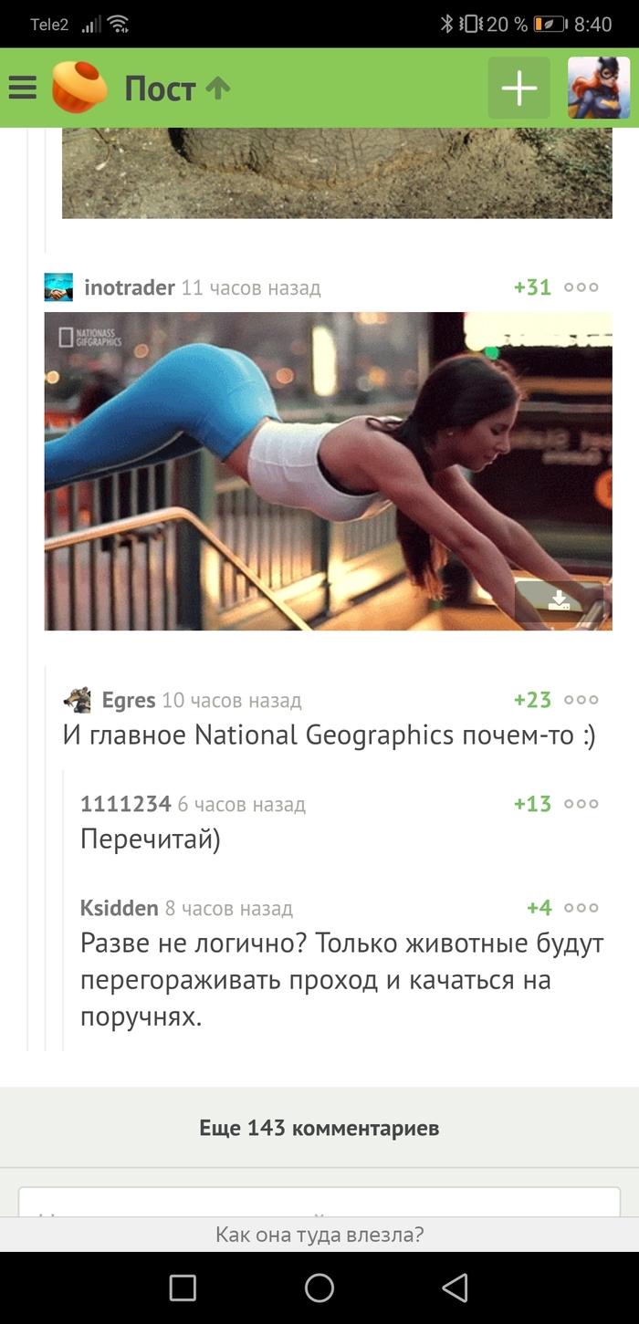 Животные Пресс, Спорт, Девушки, Животные, The National Geographic, Скриншот, Комментарии на Пикабу