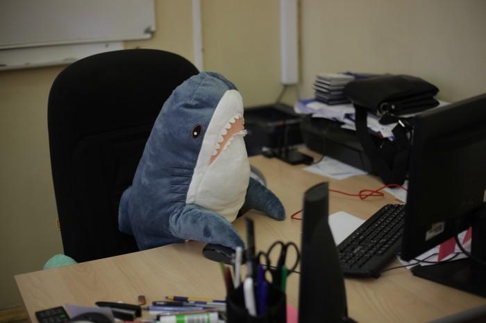 Обычный день акулки из Икеи. Акула, ИКЕА, Блохэй