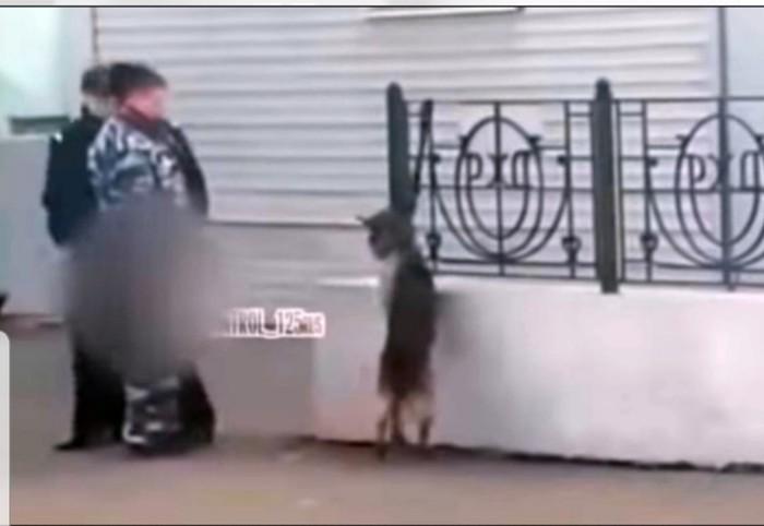 Издевательство полицейских над собакой в Уссурийске Уссурийск, Собака, Издевательство, Полиция, Видео, Негатив, Домашние животные