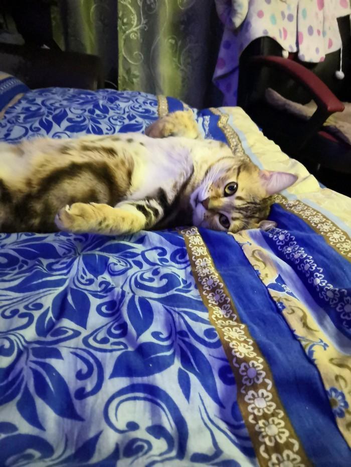 Самая любимая малышка на свете) Живность, Элегантная пушистая задница, Длиннопост, Кот, Домашние животные