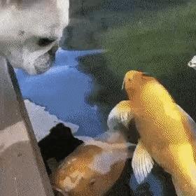 - Зина, я отвечаю, не забуду, само собой, бlя буду! Вода, Собака, Рыба, Гифка, Домашние животные